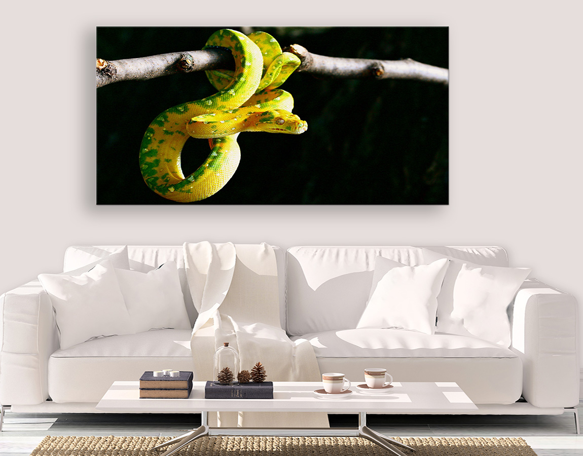 Yellow and green snake
